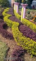 St. Teresa's School-Aliganj-Garden